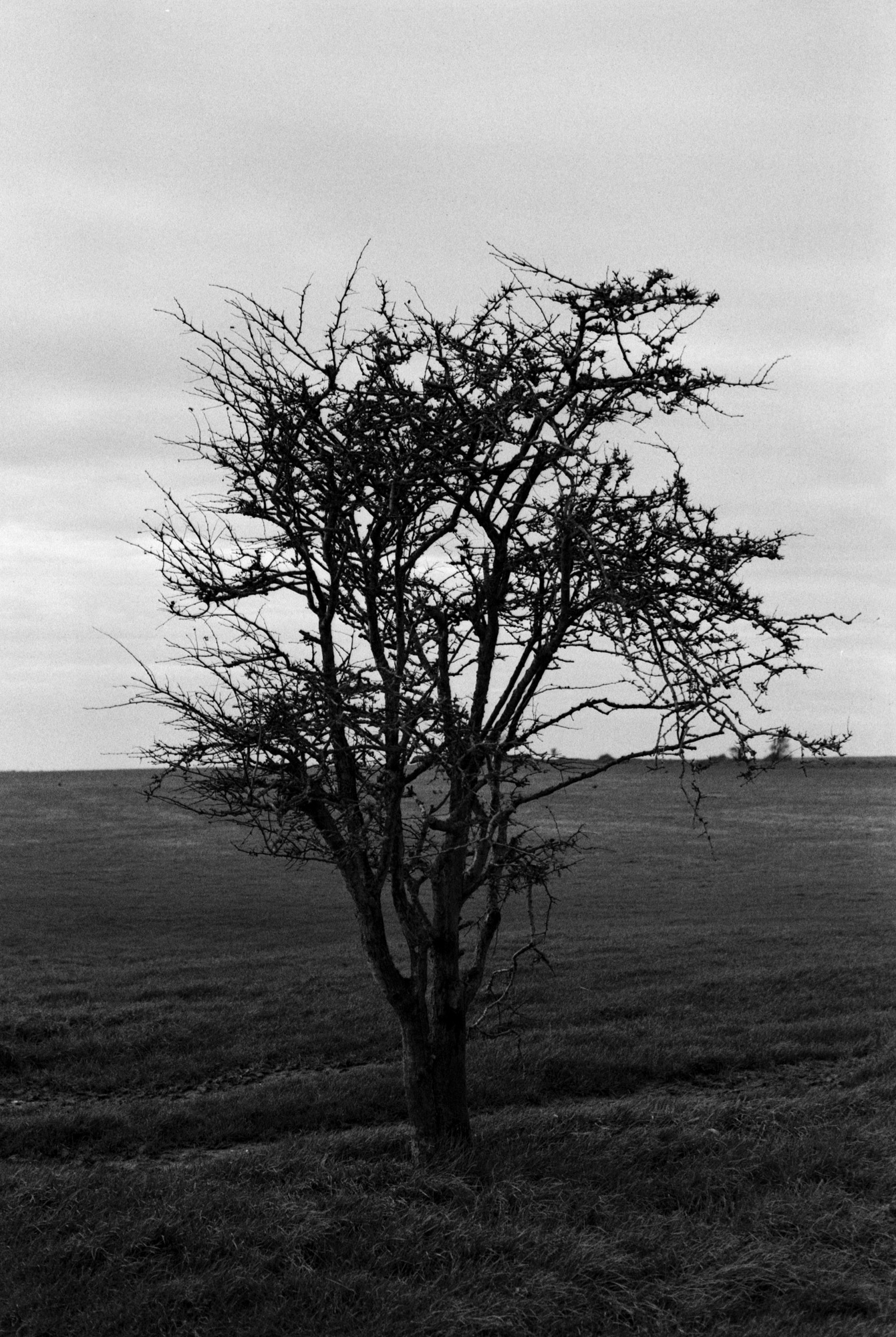 One Tree Hill, Observations Series, Photography By Ioannis Koussertari