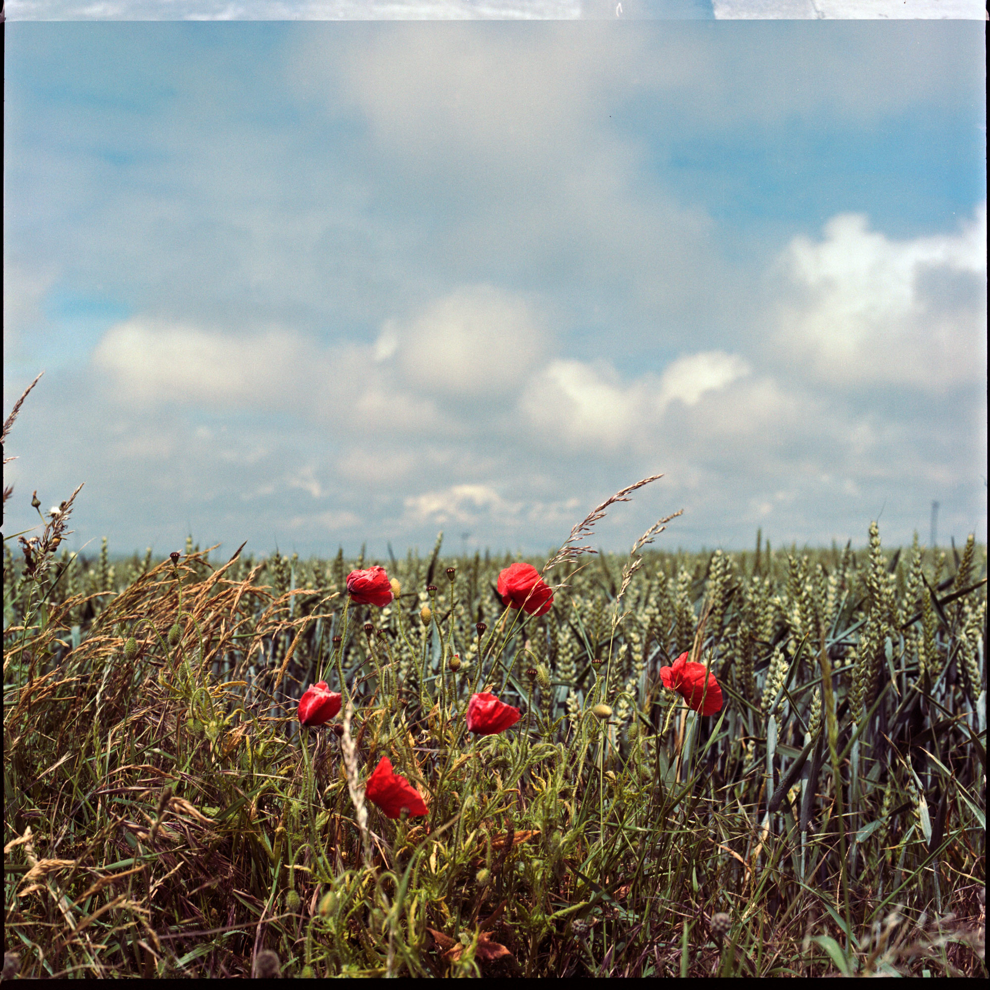 6 Poppies on Pickers Hill, The Tye, Observations Series, Photography By Ioannis Koussertari