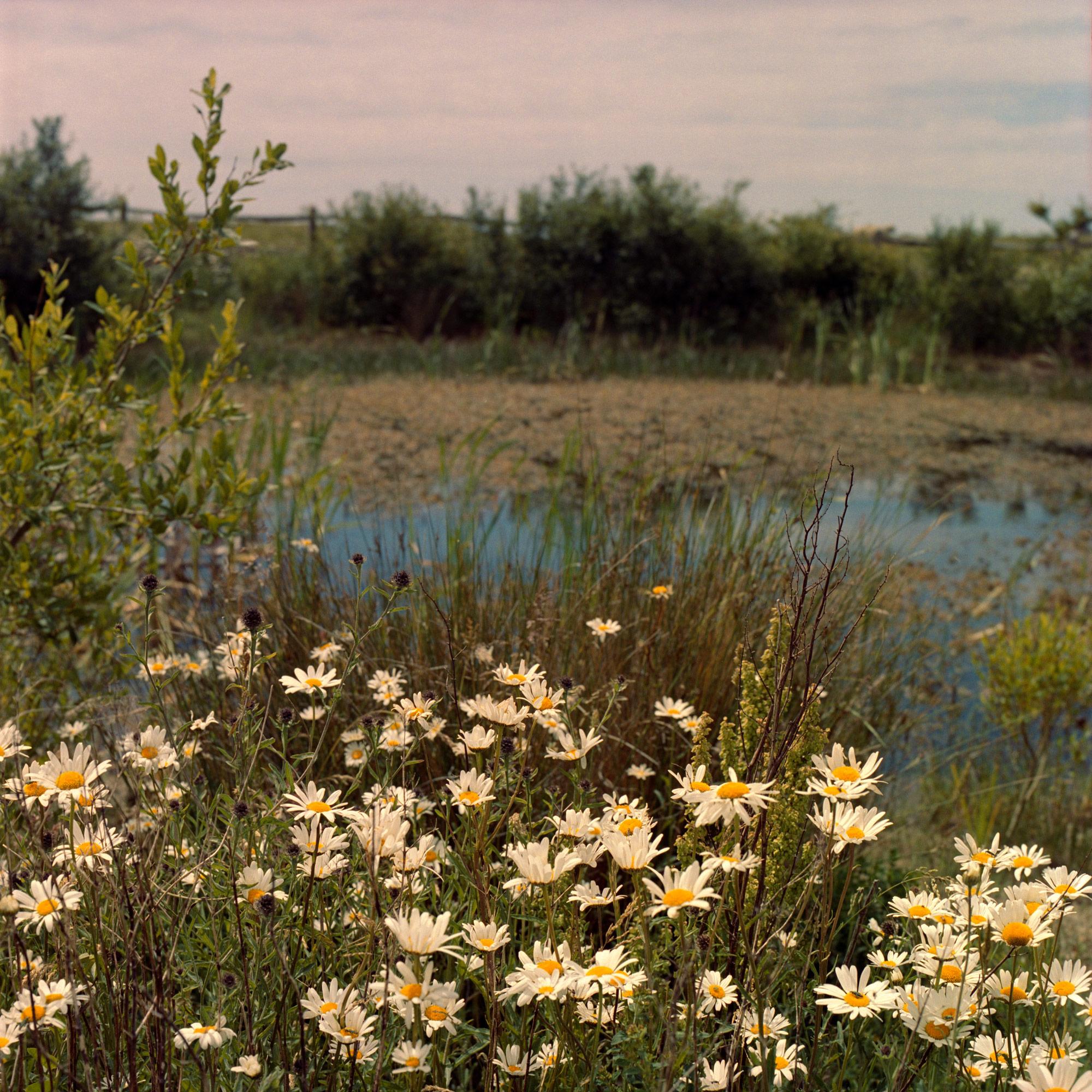 Daisy Pond, landscape on film by ioannis koussertari