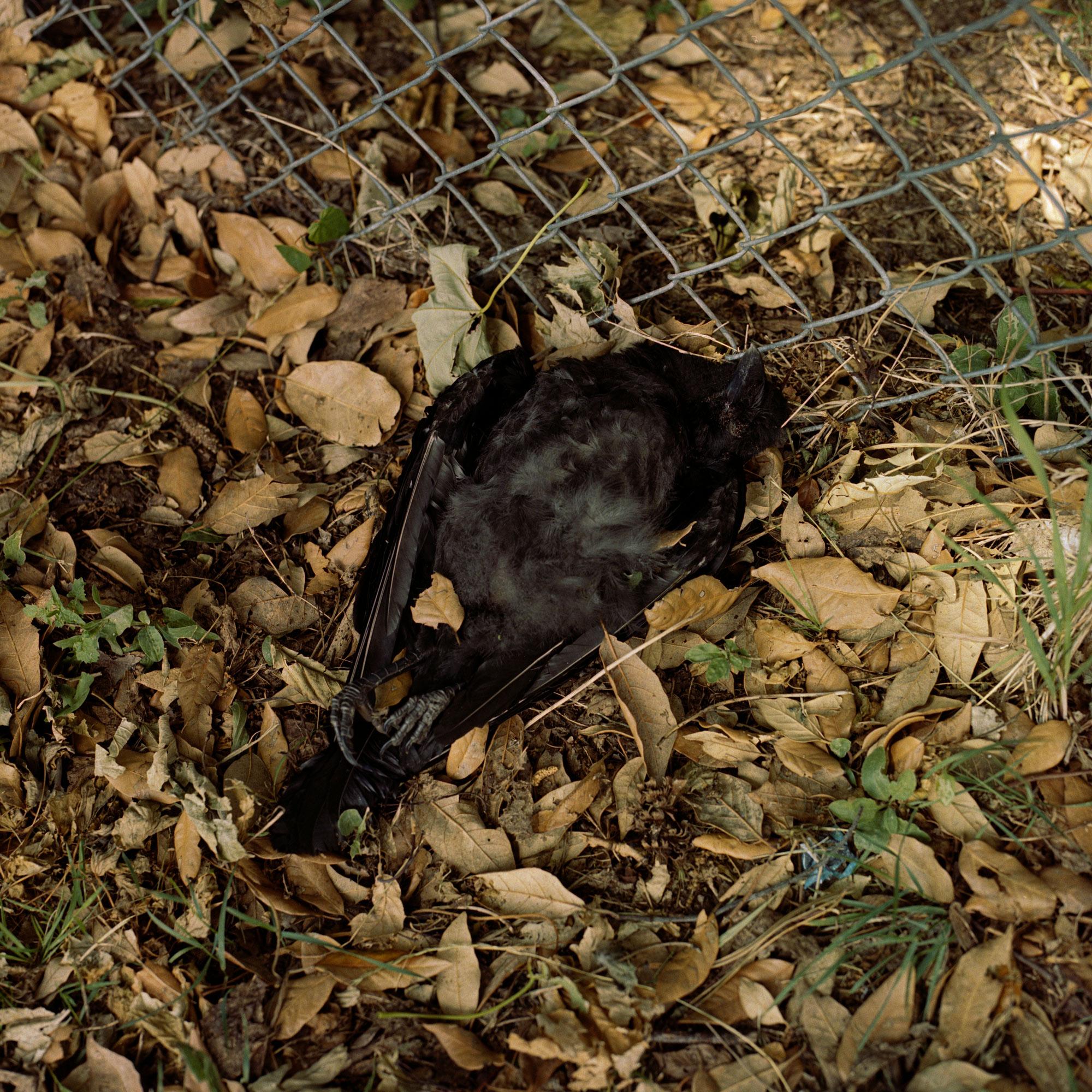 Preserved Black Bird observation on film.