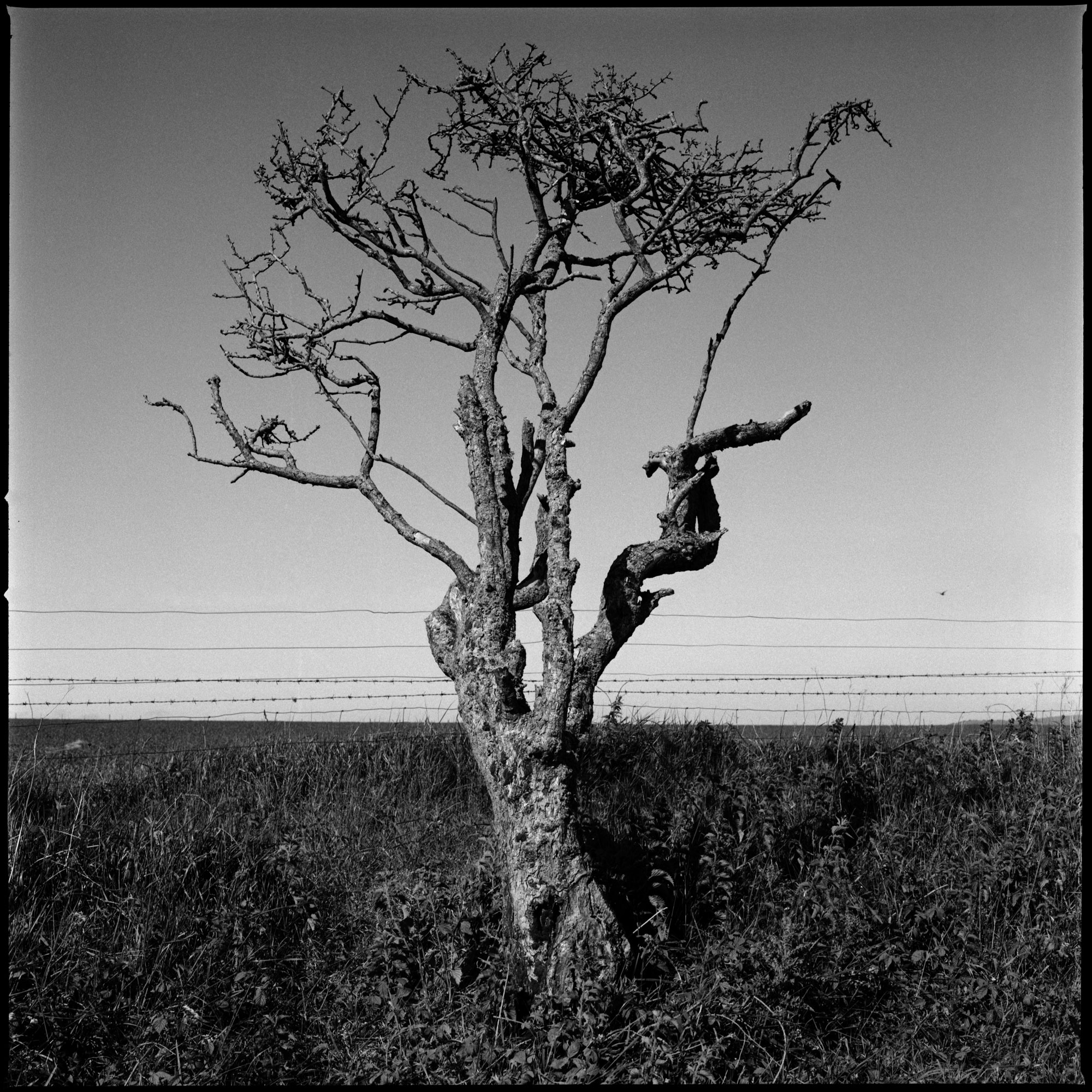 Lonely Tree, Observations Series, Photography By Ioannis Koussertari