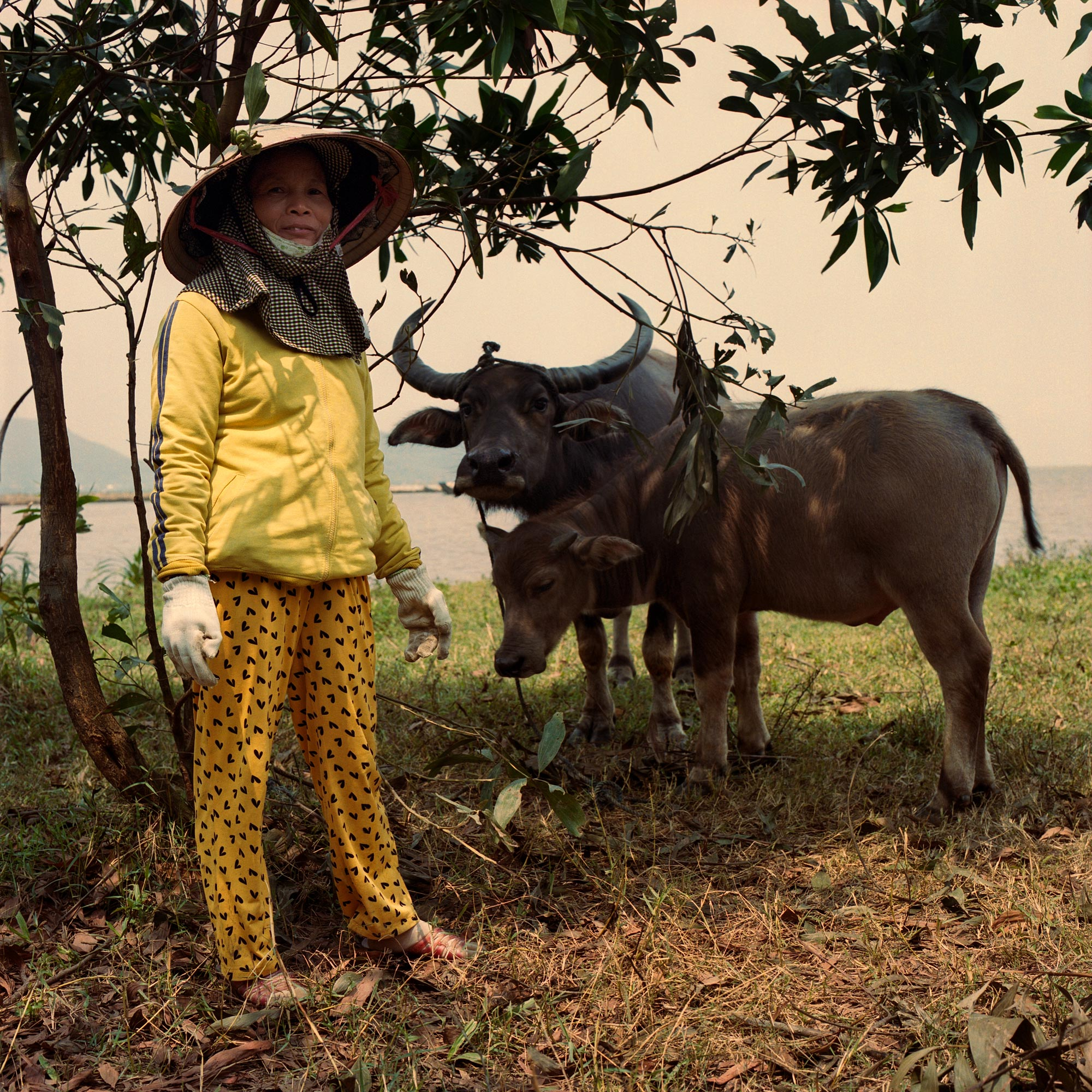 Woman Herding Water Buffalo in Hue Vietnam, Eastern Travels, photography by ioannis koussertari