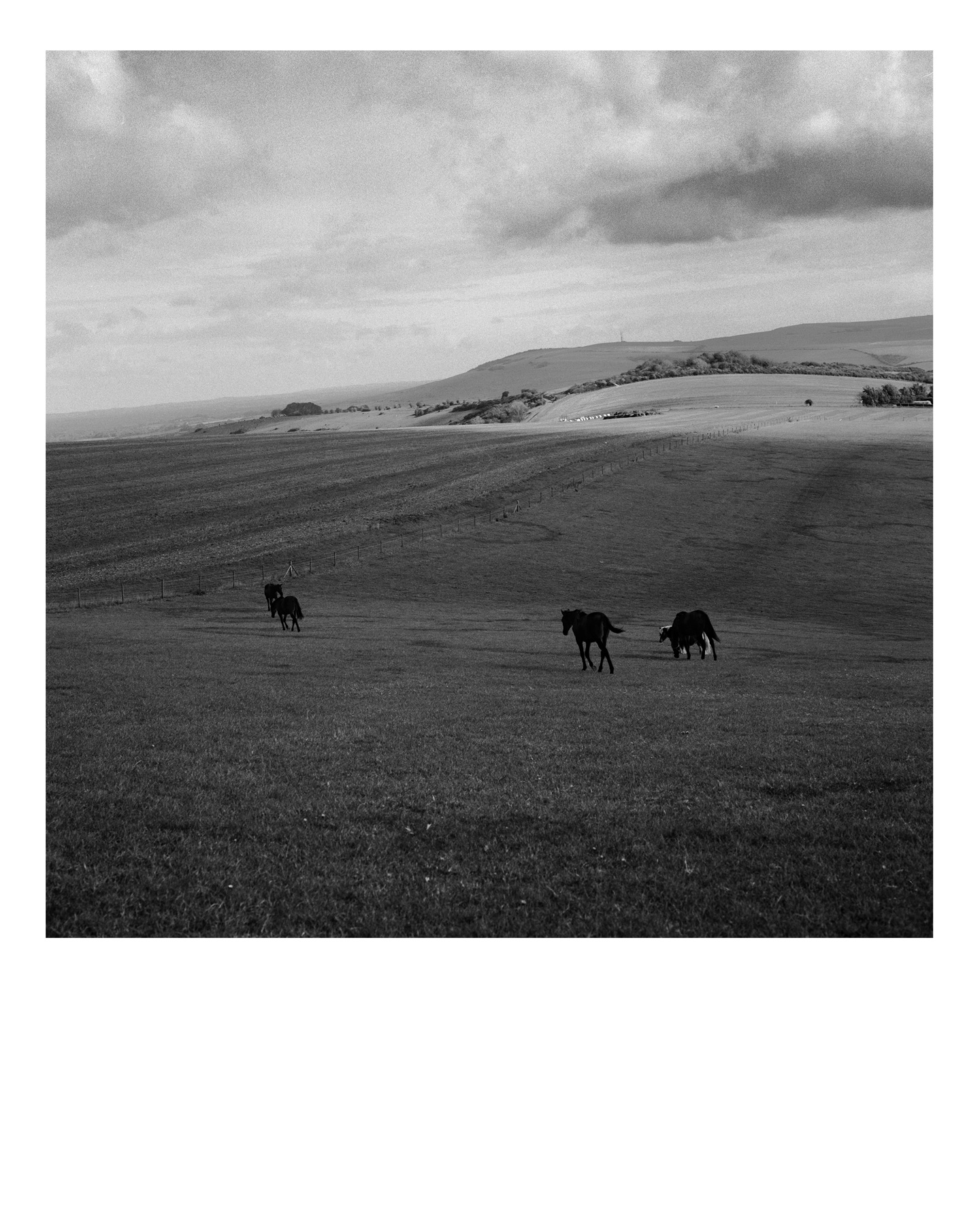 Horses, Image was photographed while on a country walk in Telscombe Village in the South East of England. Part of a wider Observations series. Using a Hasselblad 6x6 camera and Ilford FP4 125iso film, hand developed in Ilfosol 3 chemicals in 2020. Black & White archival print using traditional darkroom chemical process. Using Ilford Multigrade RC Deluxe satin paper. 10x8in print (20.3cm x 25.4cm) Medium weight 190 Limited edition print £100 GBP