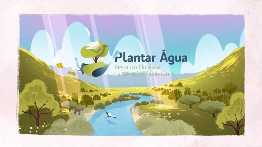 Plantar Água