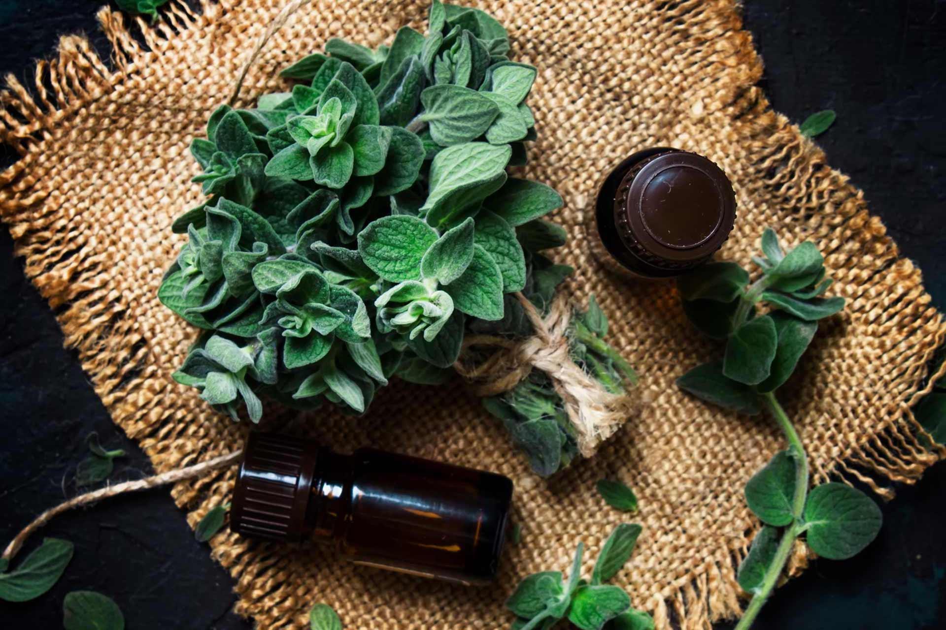Svežanj svježeg origana i eterično ulje origana