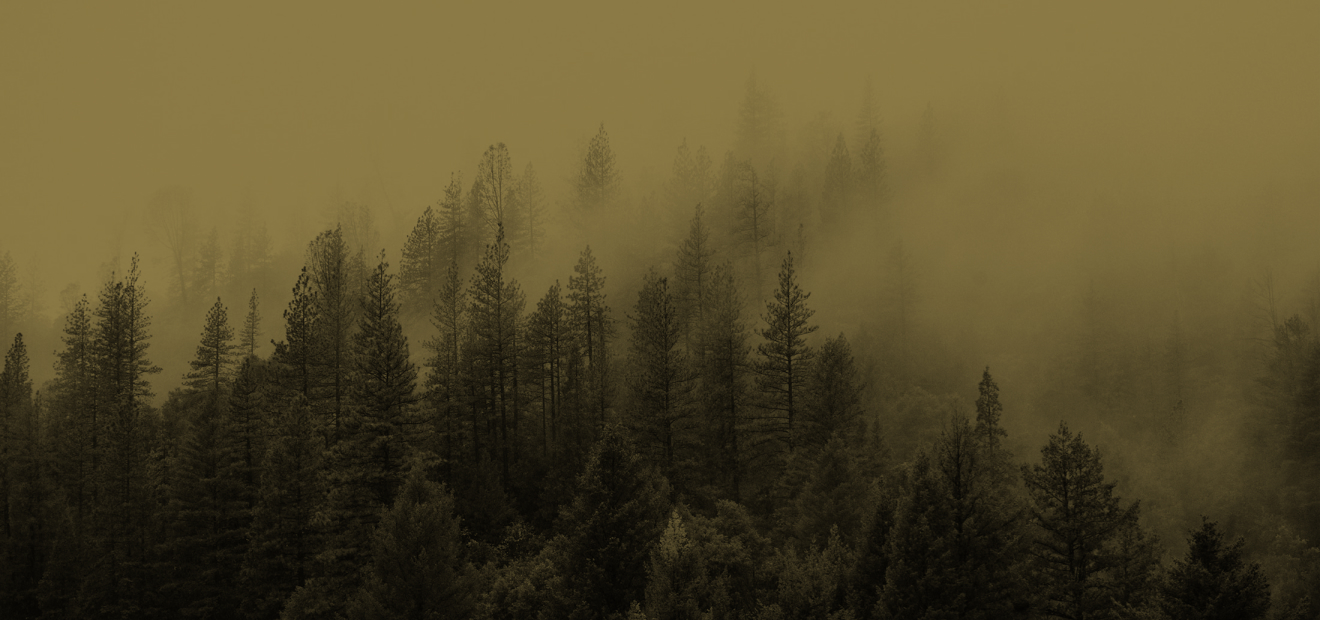 A forest with fog rolling in over top of the trees.