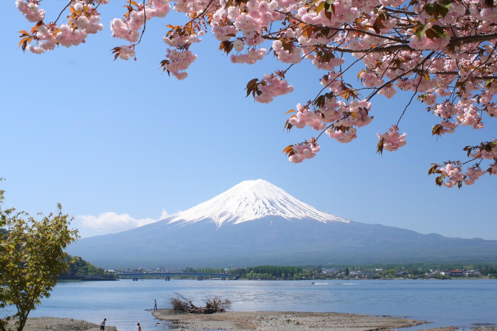 Cherry blossoms, Northern Shores of Kawaguchiko