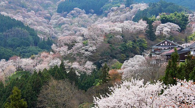 Mount Yoshinoyama