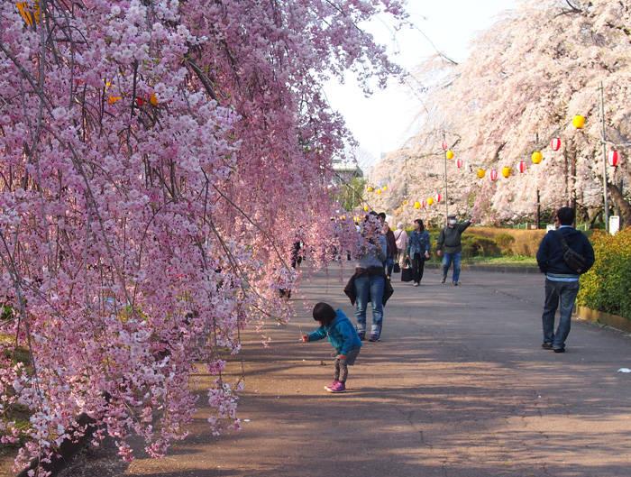 Tsutsujigaoka Park