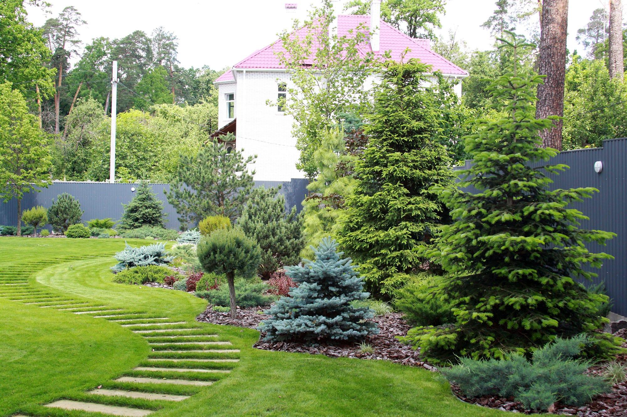 Ландшафтный дизайн садового участка: эко-дорожка и ели