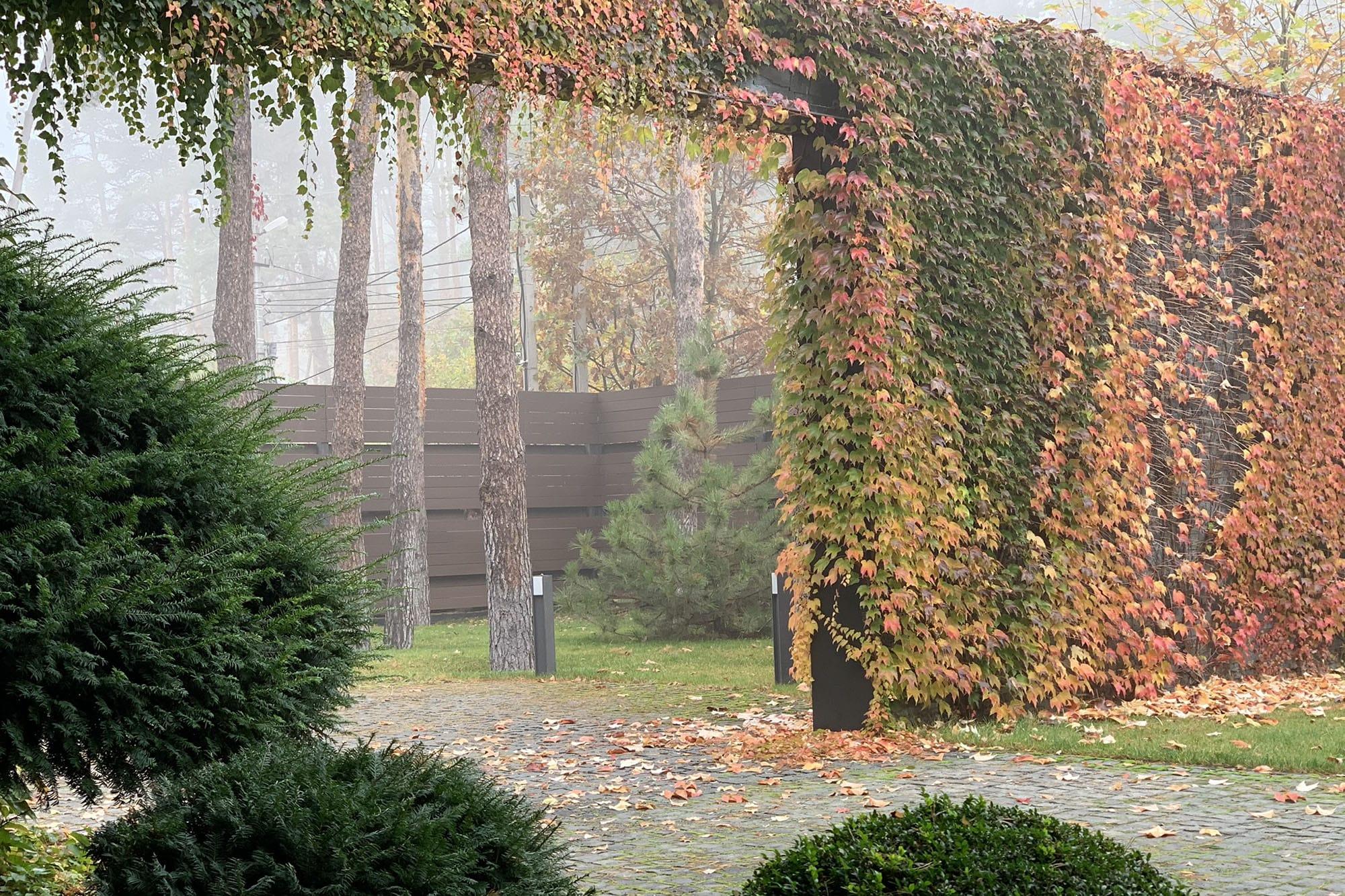 Ворота, заросшие виноградом. Фото компании ландшафтного дизайна Магия сада
