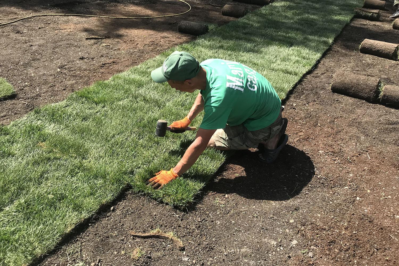 Агроном укладывает рулонный газон