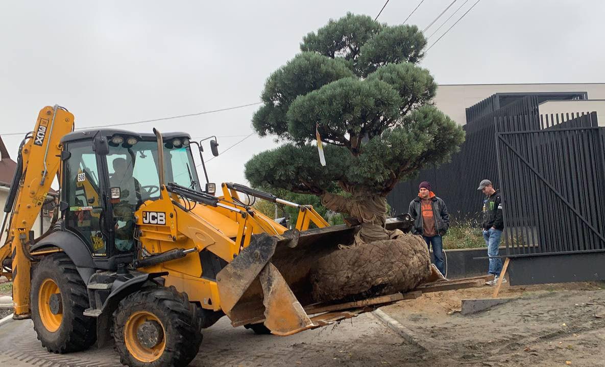 Посадка больших деревьев в Киеве