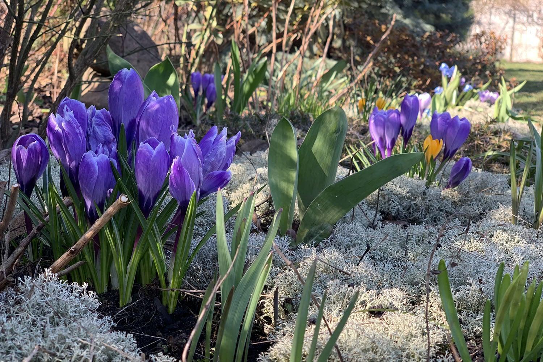 Рокарий и альпинарий, цветы
