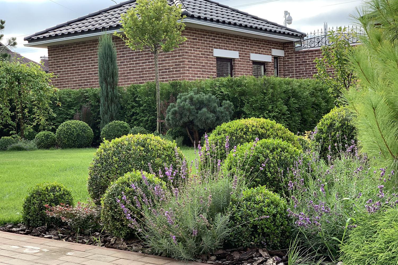 Садовая композиция из хвойников в саду