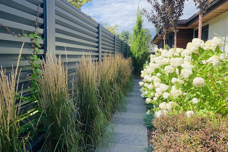 Злаковые травы возле садовой дорожки