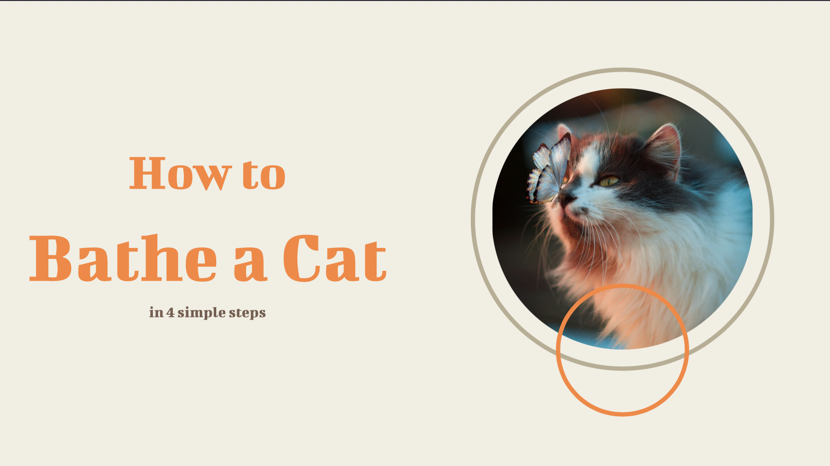 To help your audience fend off the need to nap at their desk, we have created a beautiful presentation with step-by-step how to bathe a cat instructions. Now you can wrap up in design ingenuity even faster than before. Our decktopus will leave your colleagues yearning for more with new creative presentations each day!