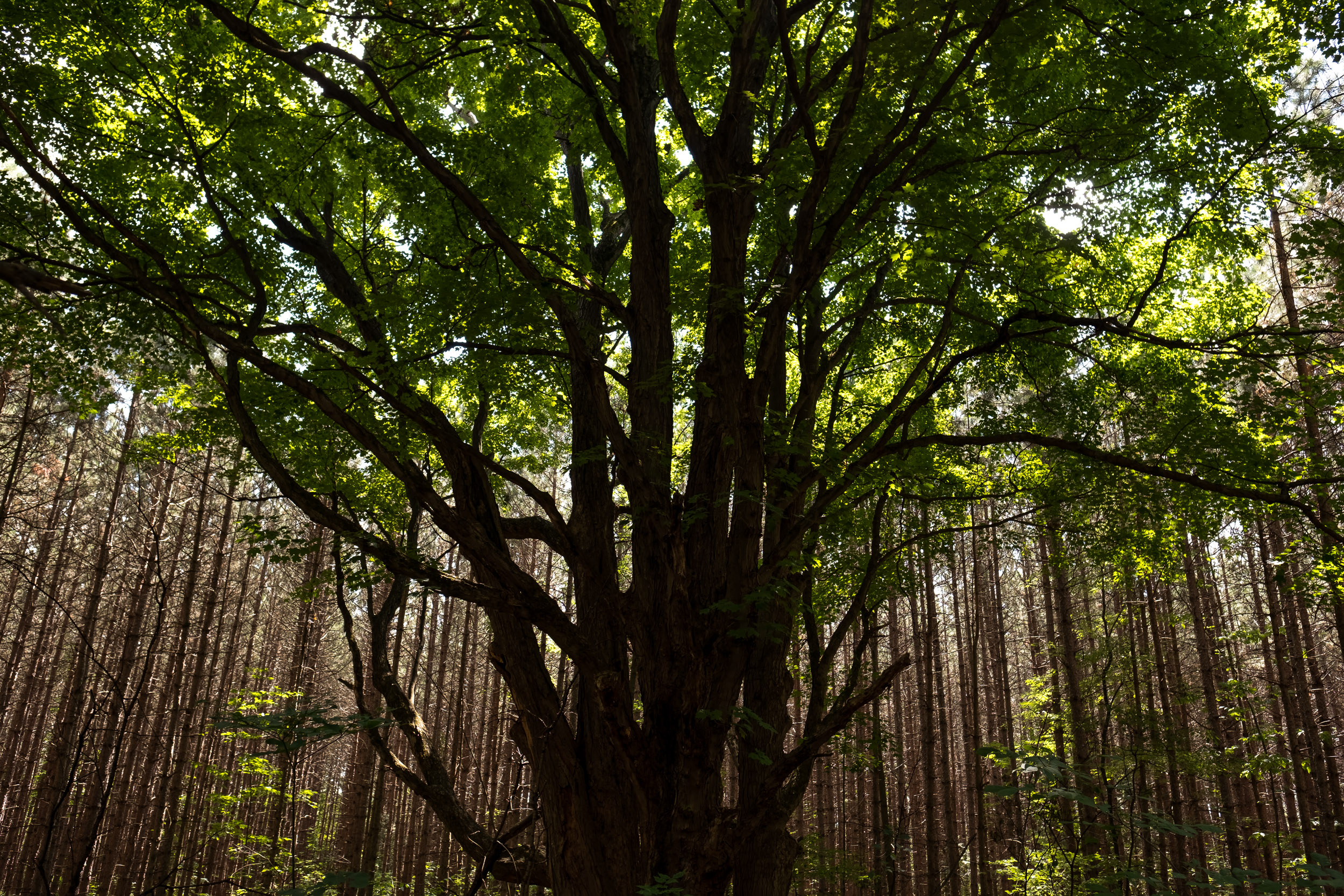 Private Forestry Consulting