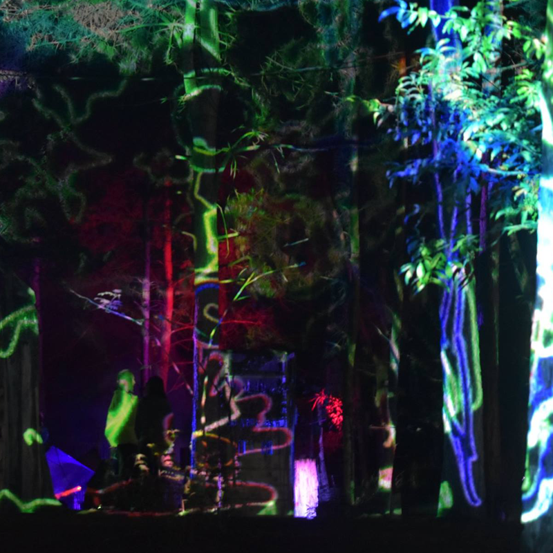 picture of Work at Into the woods festival by light-up collective