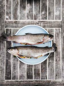 Two salmon