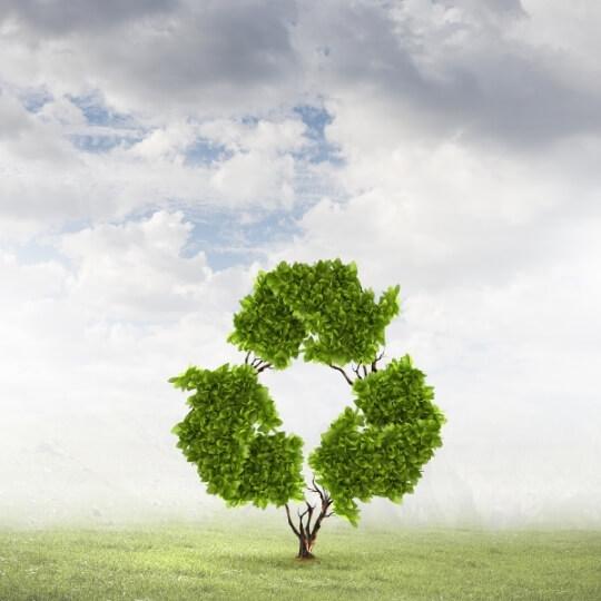 consciencia-ambiental