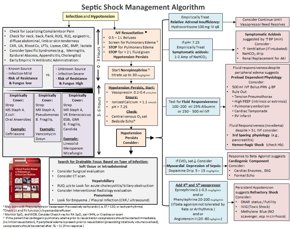 Septic shock management algorithm