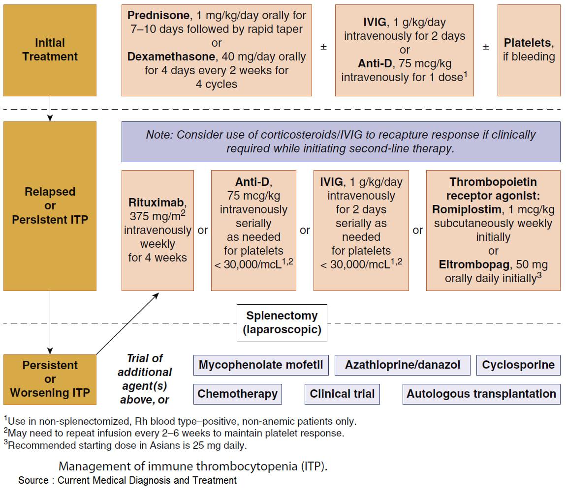 Management of Immune Thrombocytopenia