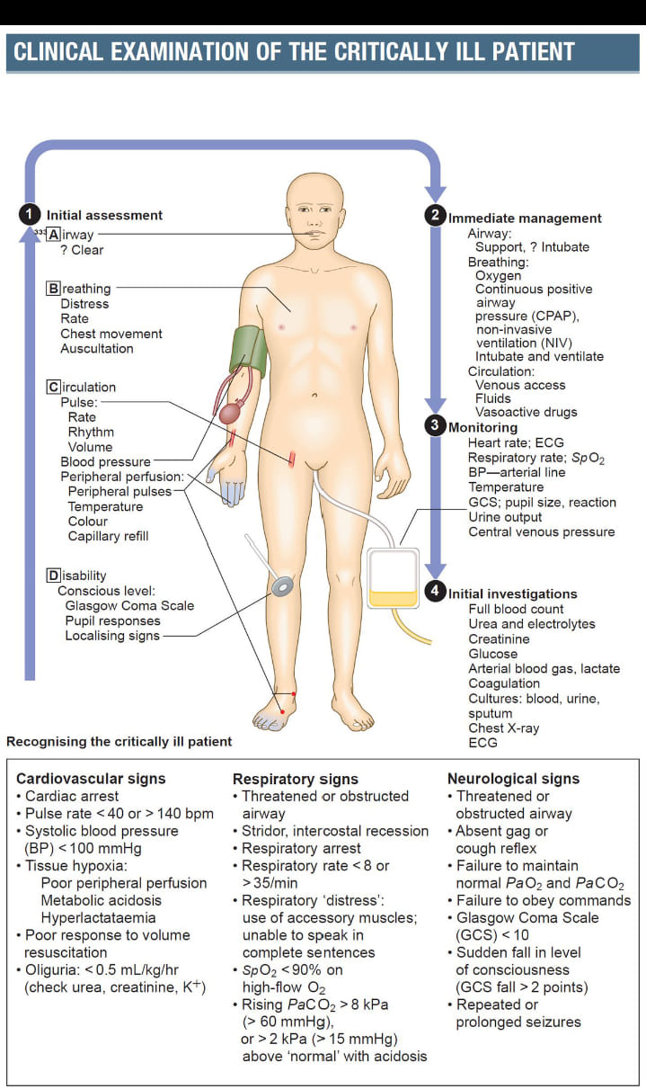 Clinical examination of critically ill patients
