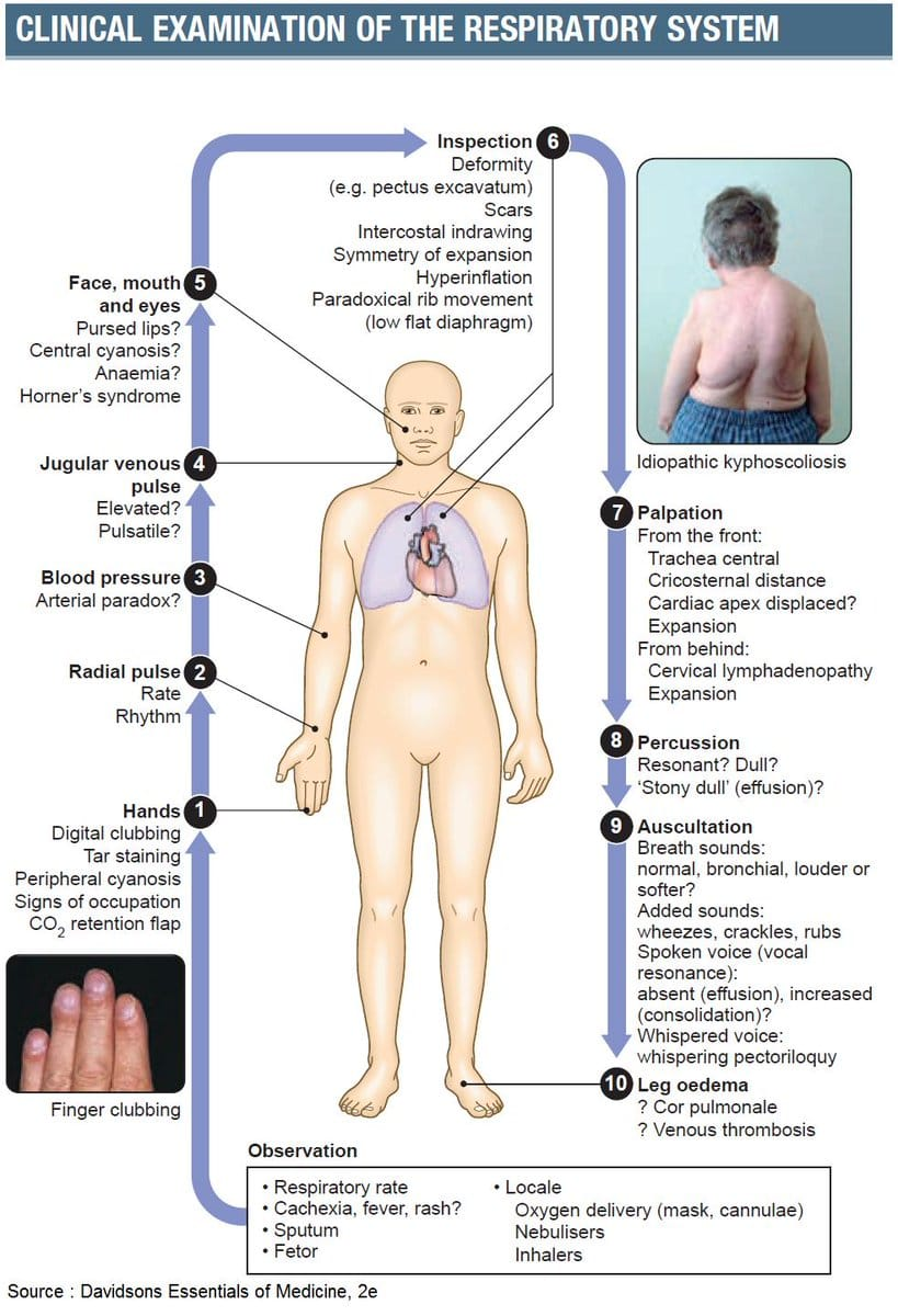 Clinical examination of respiratory system