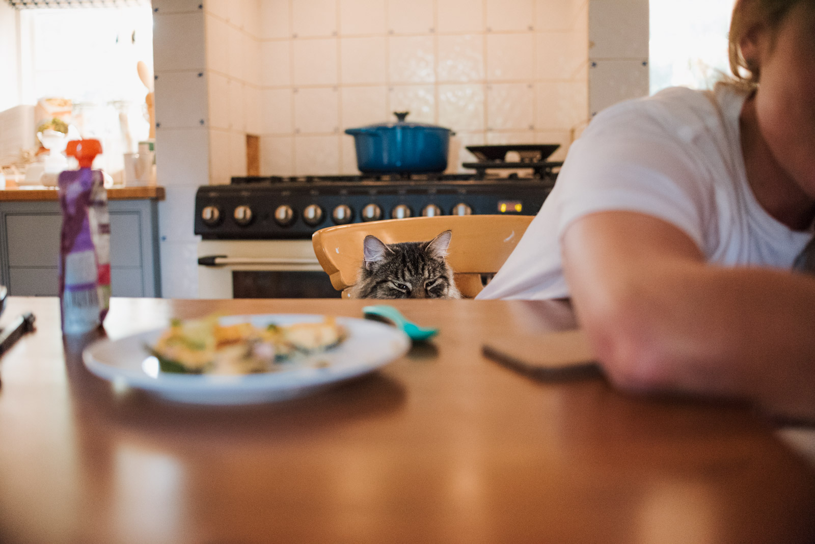 Best relaxed newborn photography by The Ginger Collective of cat waiting for food
