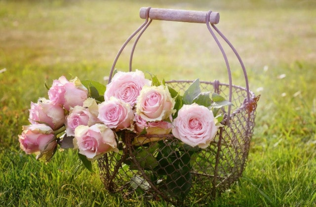 � Rosen haben eine entzündungshemmende, krampflösende und antiseptische Eigenschaft und sorgen für Elastizität, Geschmeidigkeit und Feuchtigkeit bei deiner Haut. ☙