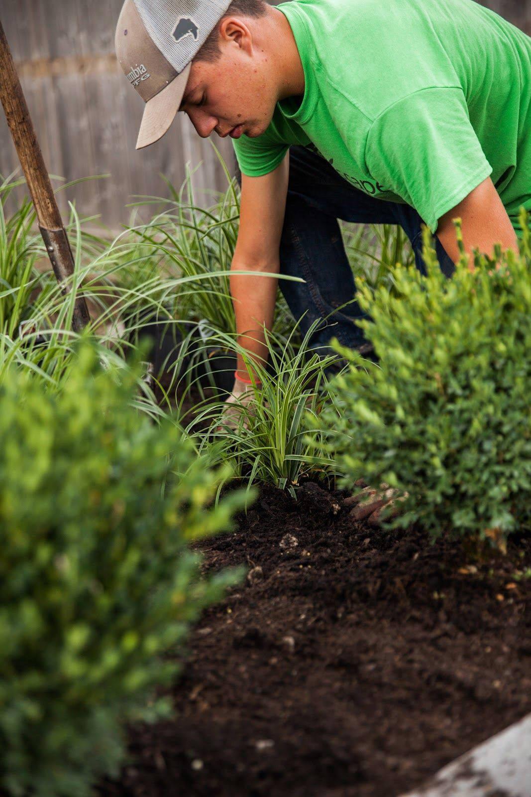 A landscaper checking the soil to maintain garden health.