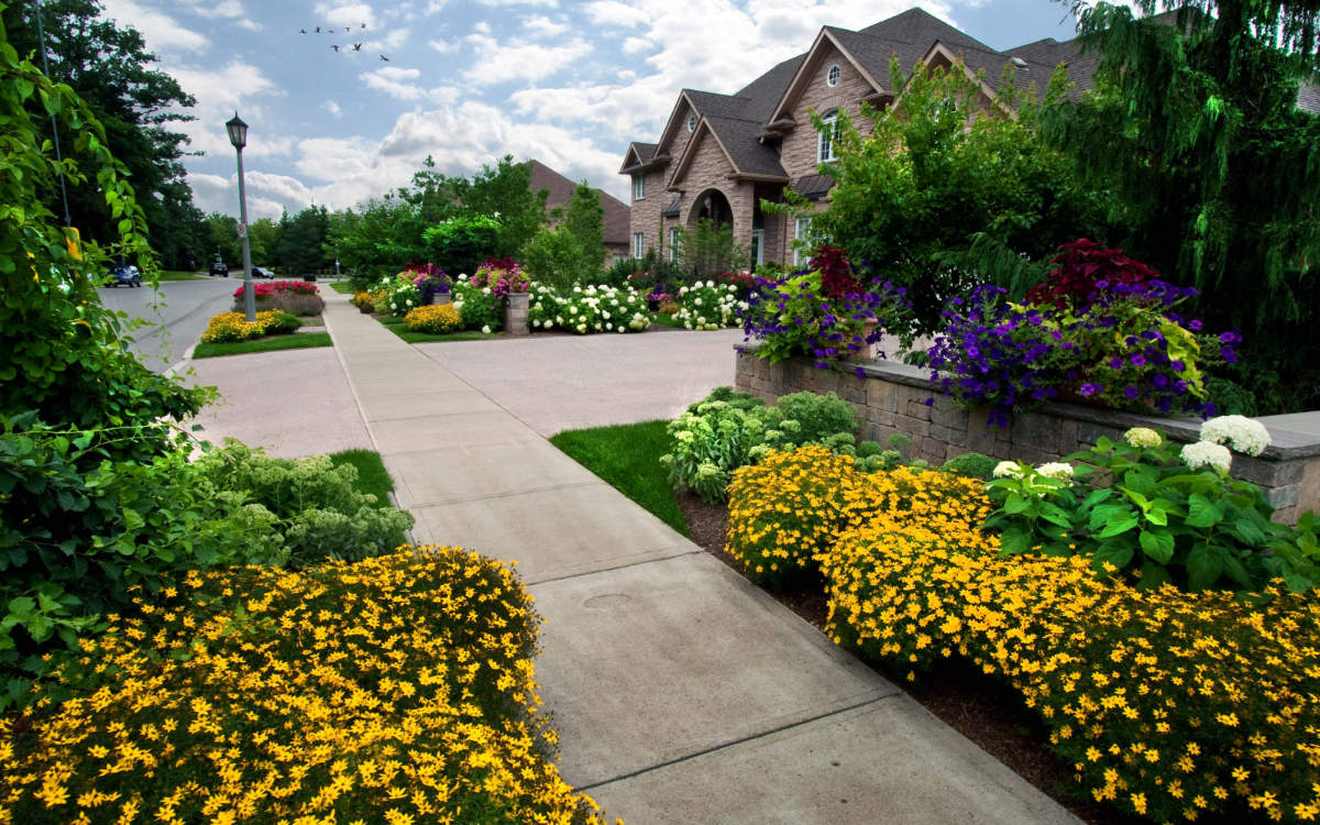 Front yard with landscape design extending past the sidewalk.