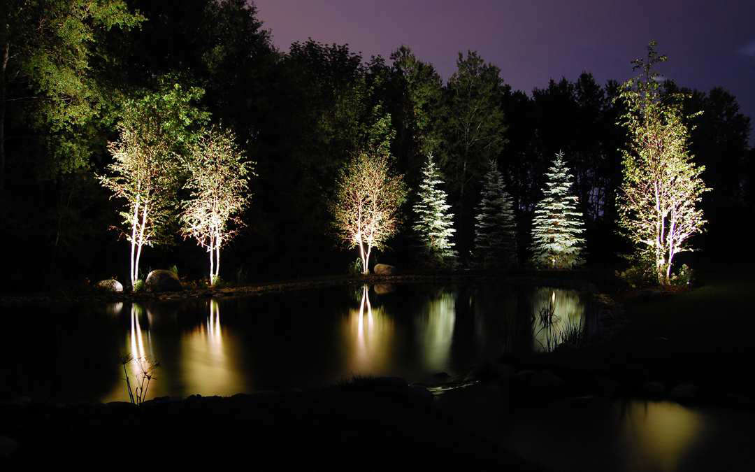 Landscaping lights shining on trees at the edge of the forest.