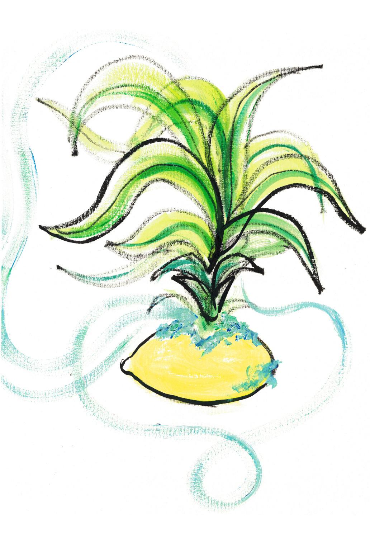 The Death Of The Lemon