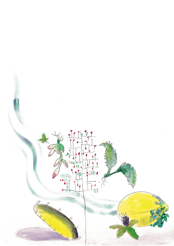 A Trampoline, A  Lemon, A Sokolant and A Pitango