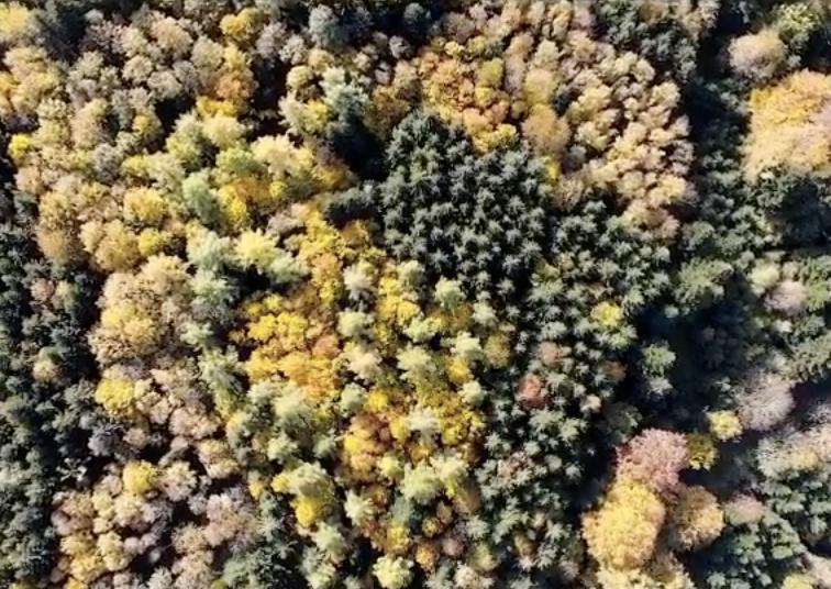 Vogelperspektive von einem herbstlichen Wald