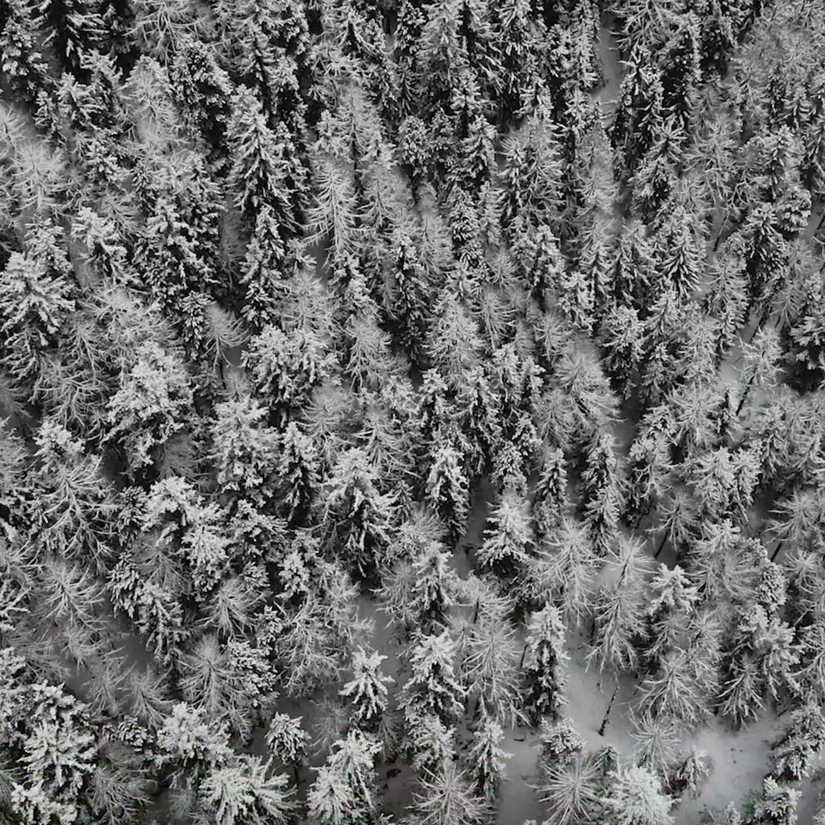 Drohnen Foto von verschneitem Wald in Saas-Fee