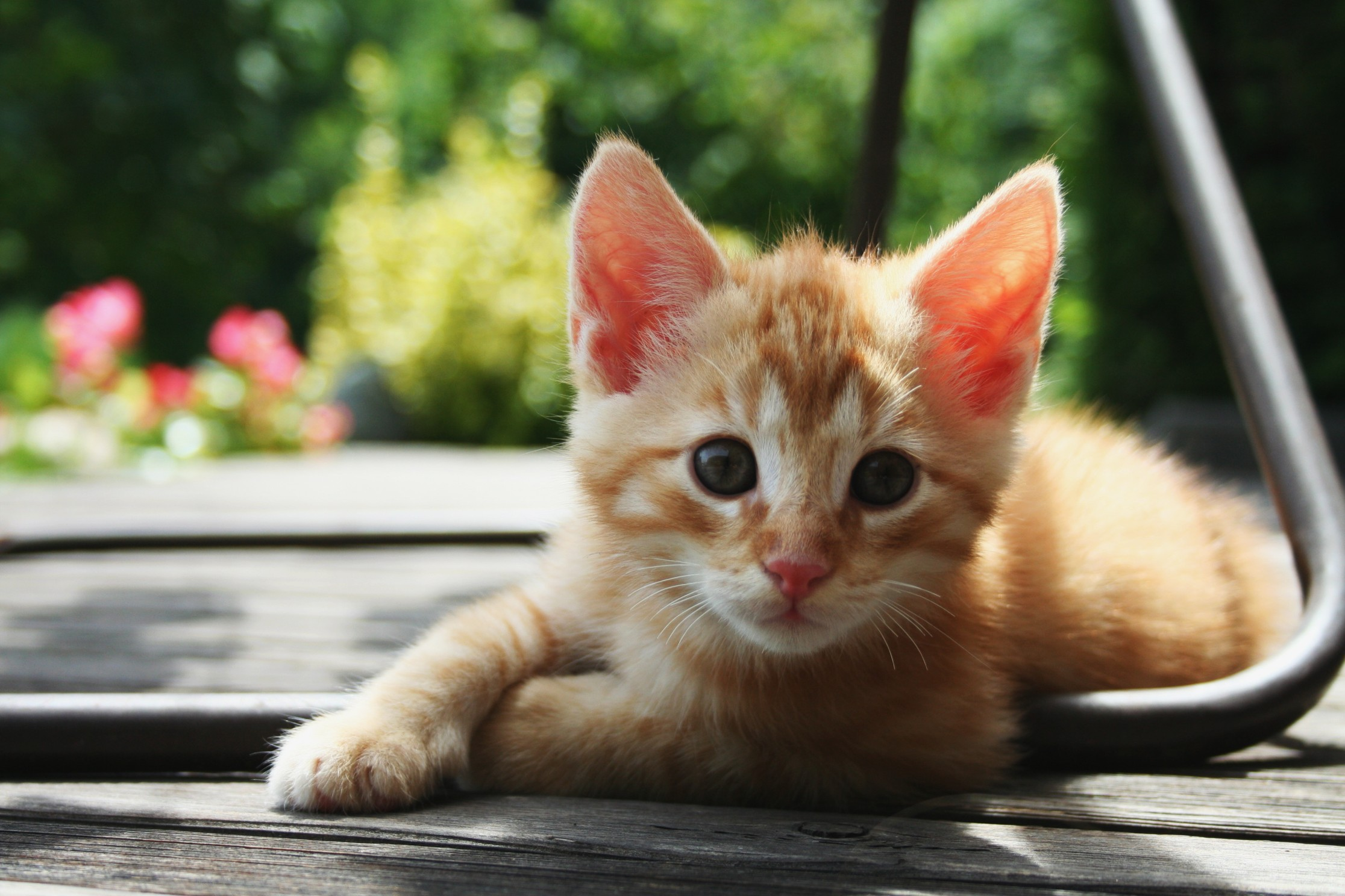 Unrelated picture of a kitten