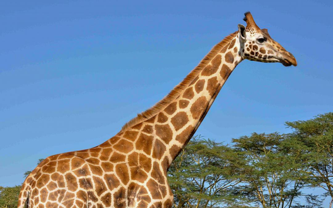 Tanzania Has So Much To See