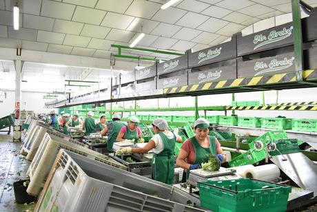 Broccoli packing processing inventory control sales traceability