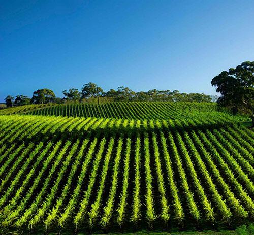 fresh produce traceability for fruit & vegetables
