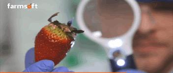 fresh produce quality control