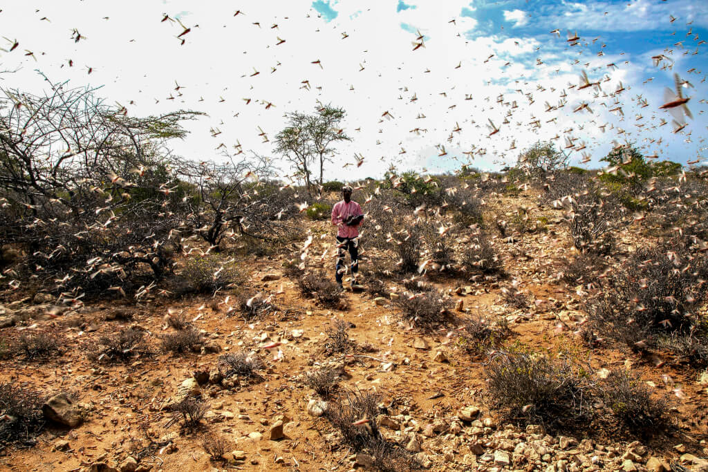 A man surrounded by locusts in East Africa