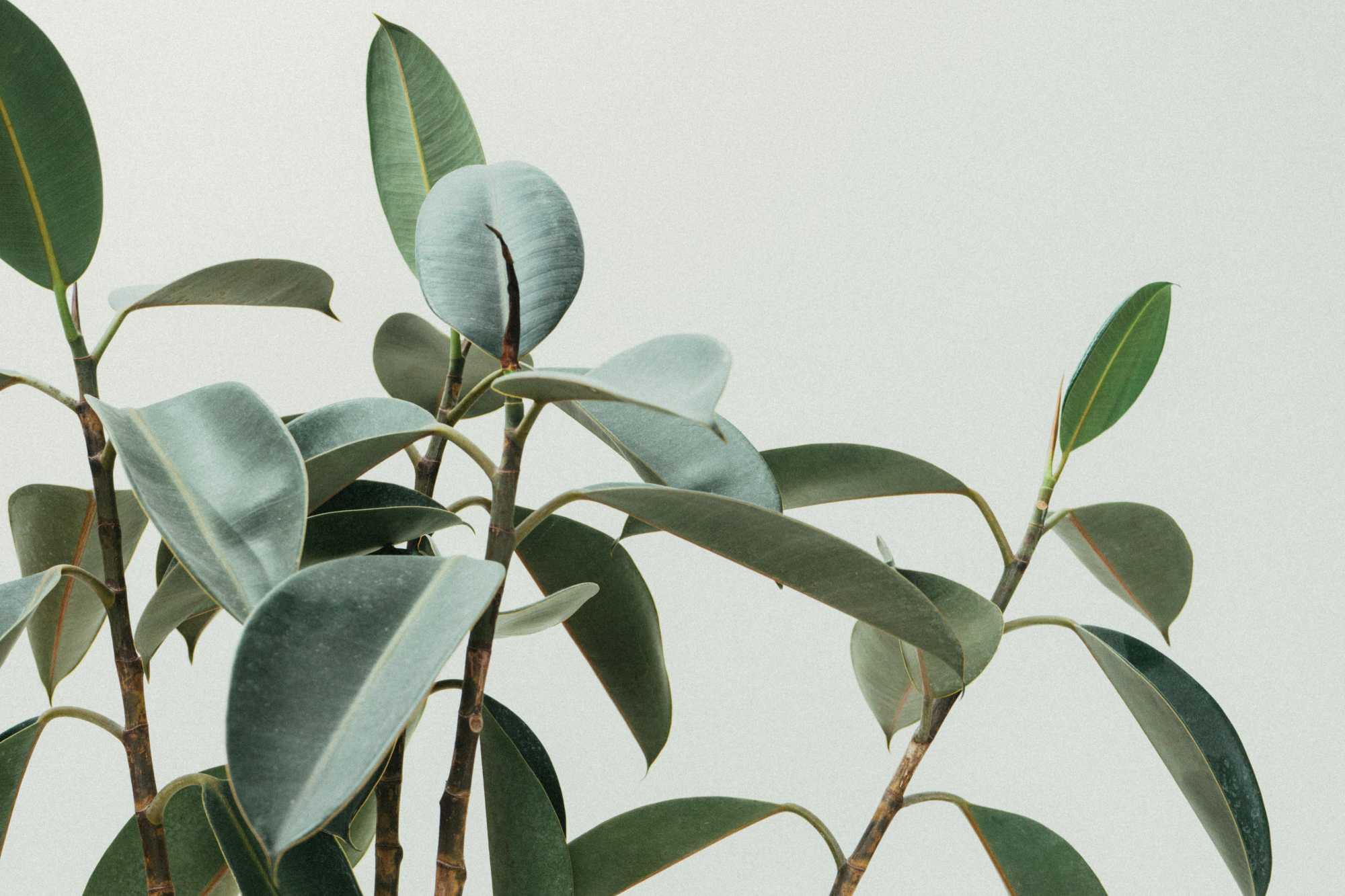 plant-leafs