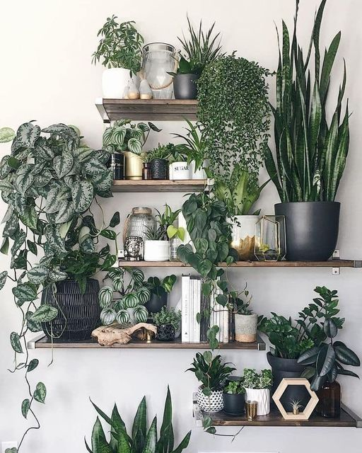Household plant display by Opal & Sage