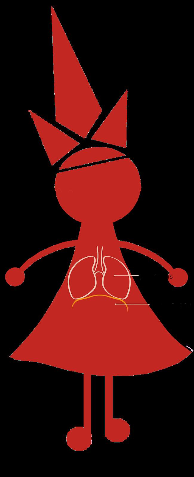 Le diaphragme dans le corps