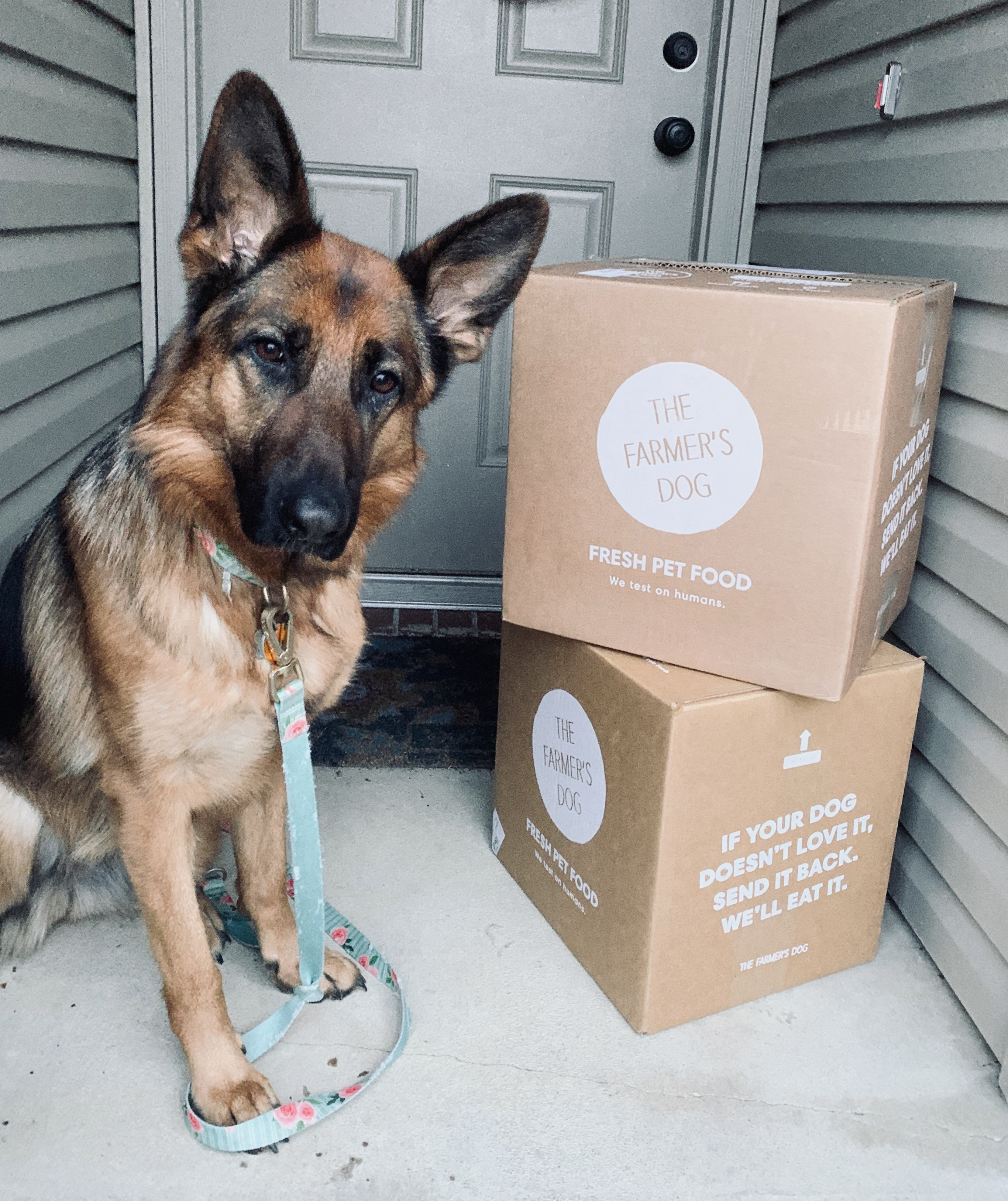 Farmer's Dog Engagement