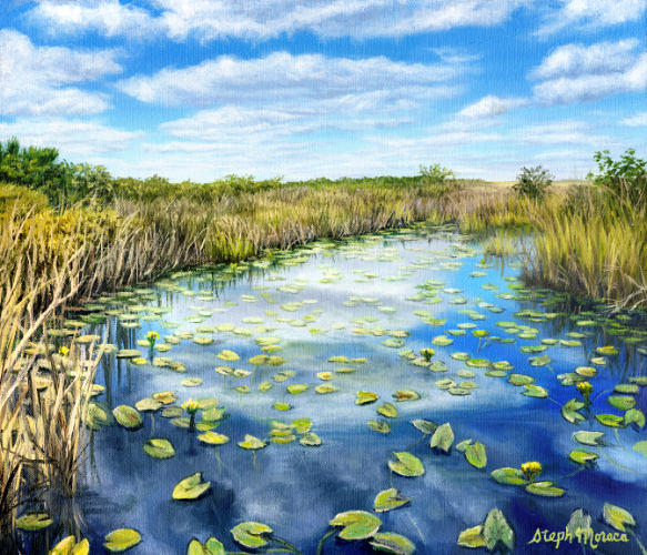 Calm in The Everglades