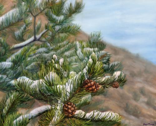 Pinecones of Pine Creek Canyon